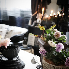 ダイニング/テーブル/ビオラ/ローブドゥアントワネット/花のある暮らし/正月/... 今年最後のガーディニングも 終わりお家で…