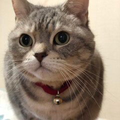 親戚周り/cat/猫/ネコ/ゴールデンウィーク/わたしのゴールデンウィーク/... 今年は長い移動距離 親戚に挨拶に行ったり…