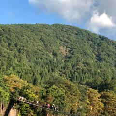 おでかけ/秋の風景/秋/車の旅/旅/旅行/... 飛騨高山 白川郷へ 行ってきました。 橋…