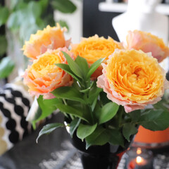 サーモンピンク/育てたる/オレンジ /庭/🍘/バラ/... 今年初のバラ イスラエルかモロッコのバラ…