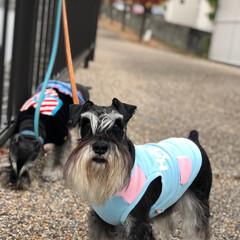 散歩道/紅葉/ドッグ/dog/犬/ペット/... うちの子ベストショットは日々のお散歩です…