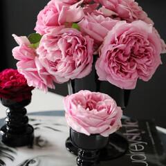 エレガント/モダンインテリア/pink/BLACK/ピンクブラック/ピンク/... 今日のバラを使ったインテリア 一年中バラ…