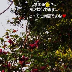 夕陽/暮らし/風景/草花/花/景色/... 🌅夕陽と草花・庭の花(6枚目)