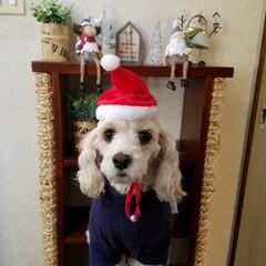 ペット/ペット仲間募集/犬/わんこ同好会/クリスマス/雑貨/... X'mas🐶 (。・_・。)ノハーイ ホ…(3枚目)