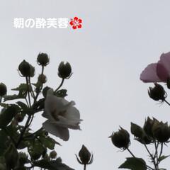 ガーデン/花/庭/金柑/🍘 最近のお庭です☝ 同じ🌺🍊🌳等の投稿です…(5枚目)