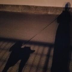 日暮れ時/夕焼け/🐩のお散歩/アートな景色/フォロー大歓迎/ペット仲間募集/... 『アートな景色』 🌲久々のお散歩🐩🚶♀…(4枚目)