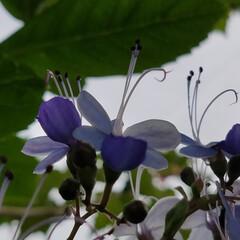 庭/花/ガーデン/多肉植物 お庭の花達💠(10枚目)