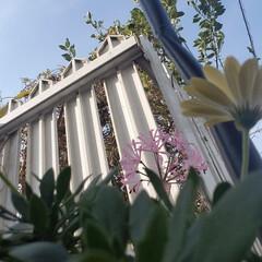 ガーデニング/garden/庭の花たち PINKの花  頂いたのですが、名前がわ…