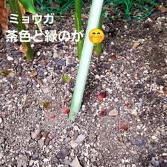 ガーデン/花/庭/金柑/🍘 最近のお庭です☝ 同じ🌺🍊🌳等の投稿です…(8枚目)