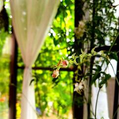 花/テラスでFlower/フォロー大歓迎/住まい/わたしのお気に入り/華/... 以前、テラスで一生懸命咲いていた花。今は…