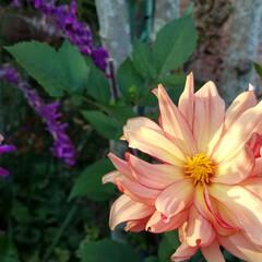 庭/花/ガーデン/多肉植物 お庭の花達💠(2枚目)