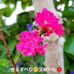 花のある暮らし/庭のある暮らし/茗荷の花/花好き/花/花を楽しむ/... たいへん☝️💦お待たせしました‼️  【…(6枚目)