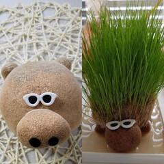 動物モチーフグッズ/面白グッズ/植物/面白植物/草 🐻かなぁ? 水を与えると頭から右の子のよ…