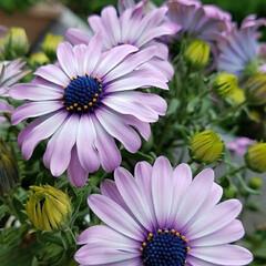 花/庭/グリーン/ガーデニング/癒し たくさん咲きましたよ‼ きれいだったので…