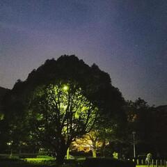 素敵な/出逢い/癒し/ツリーの照明/おでかけ/我が家の照明/... 台風の残害を見た後でしたので、心癒す素敵…