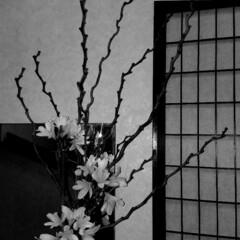 わたしのお気に入り/花のある生活/花のある暮らし/平成最後の一枚/春のフォト投稿キャンペーン/フォロー大歓迎/... 先日の枝物に元気な黄色のお花に変えました…