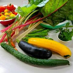 無農薬/野菜/家庭菜園/フード 昨日の収穫🌱  例のズッキーニを収穫しま…