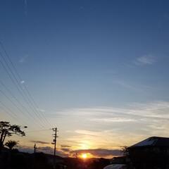はな/夕陽/犬好きな人と繋がりたい/散歩道/朱色/おでかけ/... 柿と曼珠沙華🌼  お散歩🐩🚶♀️で柿と…(3枚目)
