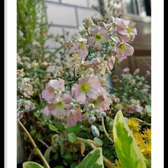 寄せ植え/花/グリーン 玄関の寄せ植えの花