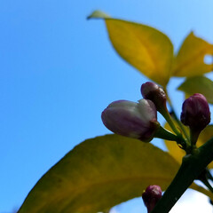 庭のある暮らし/庭の木/果物/ハーブ/実のなる木/住まい/... 皆さん、少し(*´ω`)人(´ω`*)オ…(3枚目)