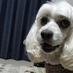 犬と花/クリスマスローズ🥀/庭の花/わんこのいる暮らし/犬と暮らす家/ワンコの笑顔 🐩みるく(*ゝω・)ノ 何んだか🤭お喋り…(1枚目)