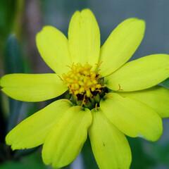 花のある暮らし/庭のある暮らし/茗荷の花/花好き/花/花を楽しむ/... たいへん☝️💦お待たせしました‼️  【…(3枚目)