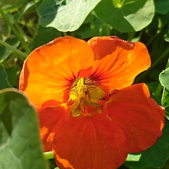 庭/花/ガーデニング/お正月2020/【PR】LIMIAcamp/住まい/...    お庭の花🌼 ♪ヽ(´▽`)/💠🏵️…(4枚目)