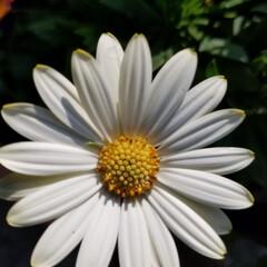 たくさんの花/庭の花/にわ/おうち/2018/風景/... 庭に咲いてるお花達②    🌺🍀🌼💠🏵️…