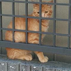 野良/さんぽ/いぬ/猫/ペット/おでかけ うちの🐶のお散歩中に野良猫ちゃんが🐶を見…(2枚目)