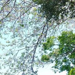 春のフォト投稿キャンペーン/ありがとう平成/フォロー大歓迎/LIMIAファンクラブ/至福のひととき/LIMIAおでかけ部/... 平成最後の美しい田んぼの光景✨  散歩道…(3枚目)