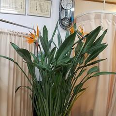 庭/花/ガーデニング/お正月2020/【PR】LIMIAcamp/住まい/...    お庭の花🌼 ♪ヽ(´▽`)/💠🏵️…(10枚目)