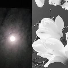アート/コラボ/月と華/いいねTop10決定戦/はじめて投稿したよ!/LIMIAFESTA/... 『 月と華 』のコラボ〰️初:*(〃∇〃…(2枚目)
