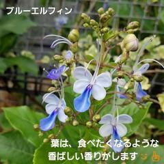 ガーデン/花/庭/金柑/🍘 最近のお庭です☝ 同じ🌺🍊🌳等の投稿です…(3枚目)