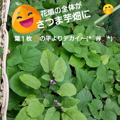 ガーデン/花/庭/金柑/🍘 最近のお庭です☝ 同じ🌺🍊🌳等の投稿です…(7枚目)