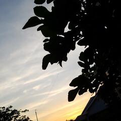 夕焼け風景/夕暮れ/花/散歩道/梅雨/梅雨対策/... 毎日☔が続いてますぅ… 怒アップ〰️🤭 …