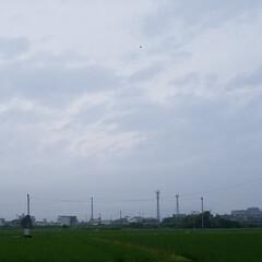 夕焼け風景/夕暮れ/花/散歩道/梅雨/梅雨対策/... 毎日☔が続いてますぅ… 怒アップ〰️🤭 …(7枚目)