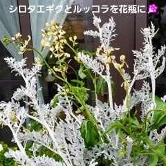 夕陽/暮らし/風景/草花/花/景色/... 🌅夕陽と草花・庭の花(9枚目)