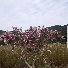 山茶花/花びらのじゅうたん/いぬのいる暮らし/木登り お二人さん🎵 お待たせ〰️🤭(再投稿) …