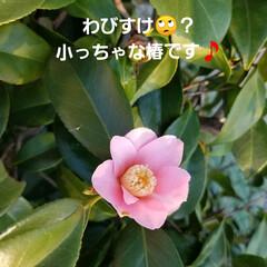 夕陽/暮らし/風景/草花/花/景色/... 🌅夕陽と草花・庭の花(5枚目)