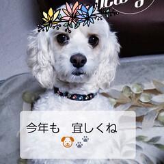 あけおめ/フォロー大歓迎/冬/ペット/ペット仲間募集/犬/... 『🎍新年のご挨拶   🐶🐾』🗻☀️ Pu…