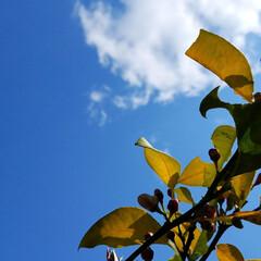 庭のある暮らし/庭の木/果物/ハーブ/実のなる木/住まい/... 皆さん、少し(*´ω`)人(´ω`*)オ…(2枚目)