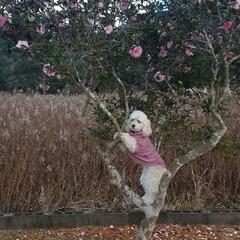 ワンコの記念撮影/フォロー大歓迎/ペット/ペット仲間募集/犬/わんこ同好会/... 以前UPしましたが、投稿できず〰️〰️‼…