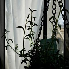 グリーン/育てる/テラス/くつろぎの場所/花/多肉植物/... ドルフィンネックレス