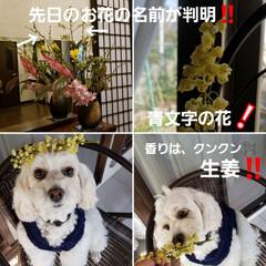 お茶菓子の木/玄関の花/犬と花/花/青文字の花/お茶菓子の楊枝/... 先日、玄関の花を投稿しましたが、ひとつ知…