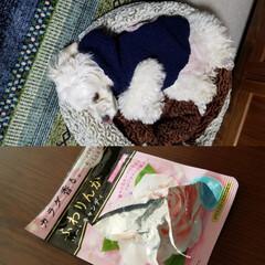 犬のいる暮らし/犬/わんこのいる暮らし/暮らし 🐶犬のいる暮らし~🎵  先日、みるくがペ…
