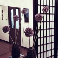 花/梅雨/ボタニカル/玄関/紫色/丸い花/... 今週のお出迎えの花『アリウム』かと…