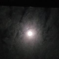 アート/コラボ/月と華/いいねTop10決定戦/はじめて投稿したよ!/LIMIAFESTA/... 『 月と華 』のコラボ〰️初:*(〃∇〃…(3枚目)