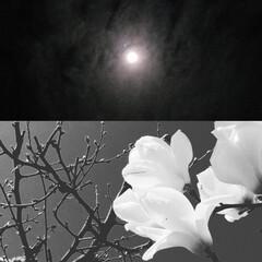 アート/コラボ/月と華/いいねTop10決定戦/はじめて投稿したよ!/LIMIAFESTA/... 『 月と華 』のコラボ〰️初:*(〃∇〃…