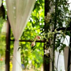テラス/暮らし/ひなたぼっこ/くつろぎの場所/庭を見る/花 ガウラ(花名) テラスでショット📷‼