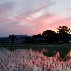 わんこのいる暮らし/アロエの花/景色/景色風景/風景/夕焼け/...  🐩🚶♀️散歩道で満開の花見っけ😊🌼 …(4枚目)